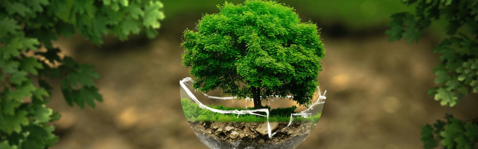 Écologie : comment initier les enfants aux bons gestes écolos ?