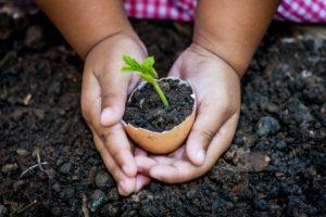 activités à faire avec les enfants : une coquille d'oeuf dans laquelle une graine a germée