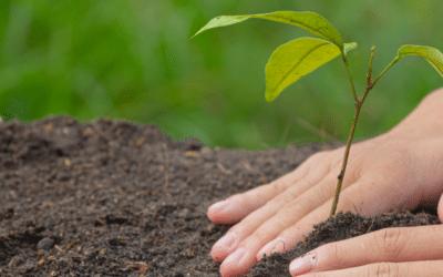 Les actions de Kidlee pour l'environnement !
