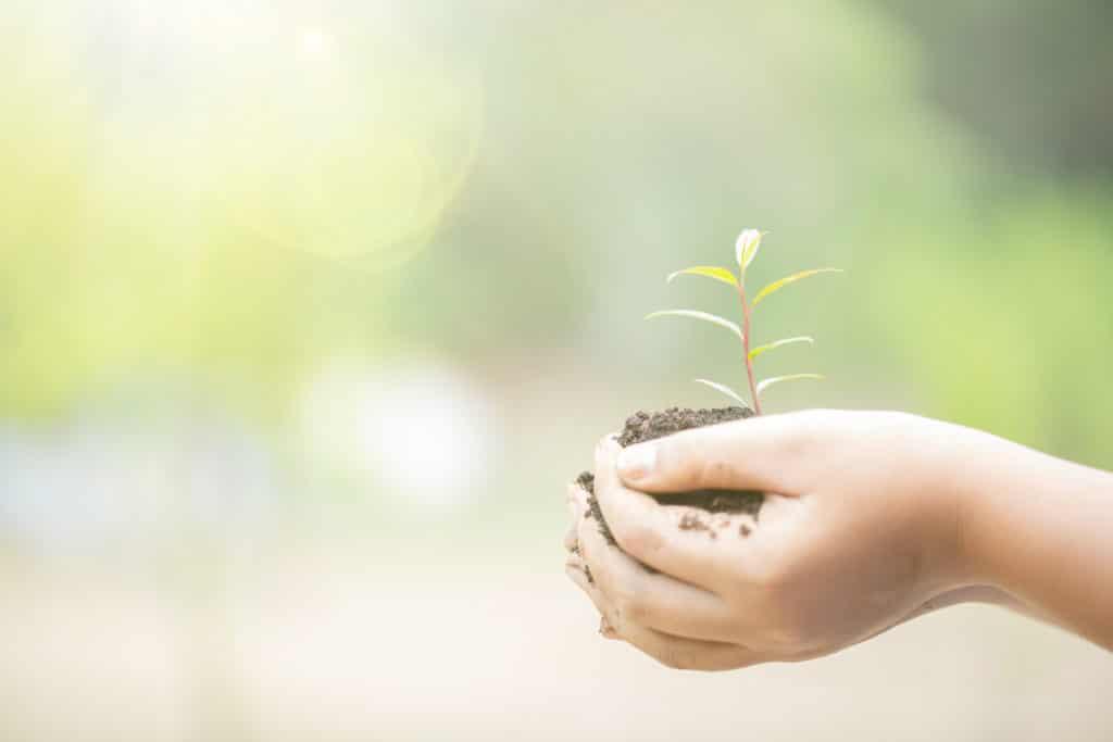 Activités pour les enfants : une main qui tient une plante