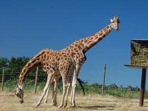 Parc animalier : safari de Peaugres