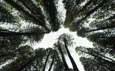 Le parrainage éco-responsable Kidlee : ou comment planter des arbres en seulement quelques clics !  !