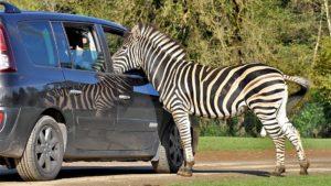 parc animalier : planète sauvage